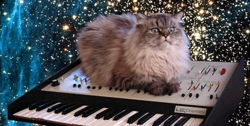 cat-keyboard-space1